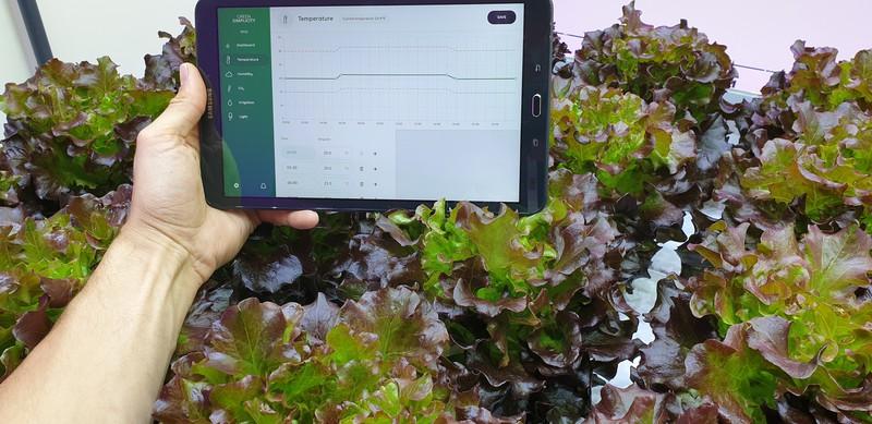 Temperatuur planten